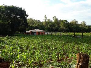 Chácara   Zona Rural (Igarapé)   R$  220.000,00