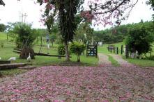 Fazenda   Paciência (Catas Altas)   R$  1.300.000,00