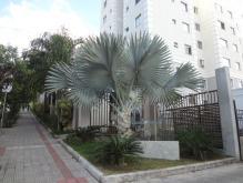 Apartamento   Santa Amélia (Belo Horizonte)   R$  229.000,00