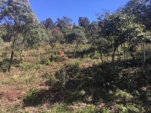 Lotes em Condomínio   Aconchego Da Serra (Itabirito)   R$  80.000,00