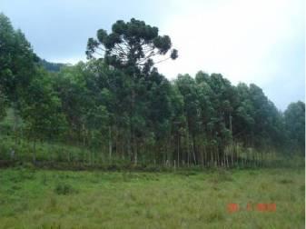 Fazenda   Municipio Correa De Almeida (Barbacena)   R$  550.000,00