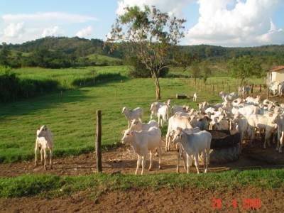 Fazenda à venda